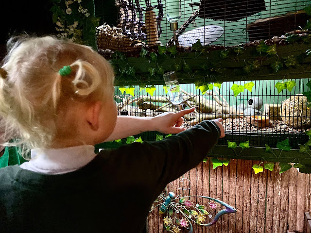 A 3 year old with bunches pointing at a cage with little mice in