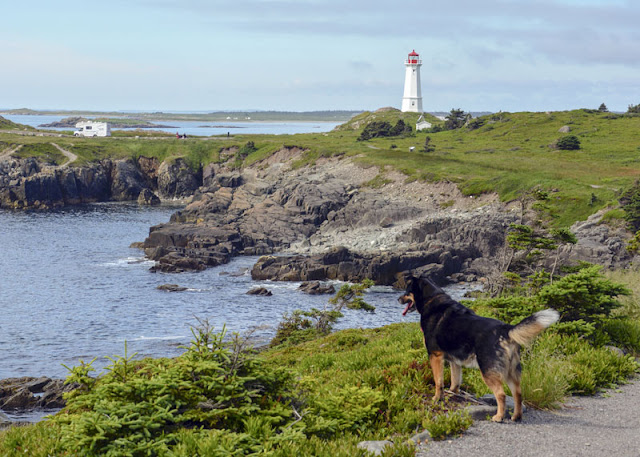 A dog looks out at the sea and a lighthouse in Nova Scotia