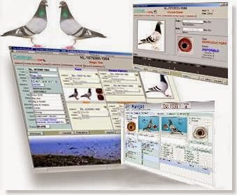 pigeon planner software para colombofilia