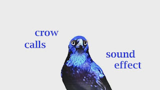 learn animal crow sounds