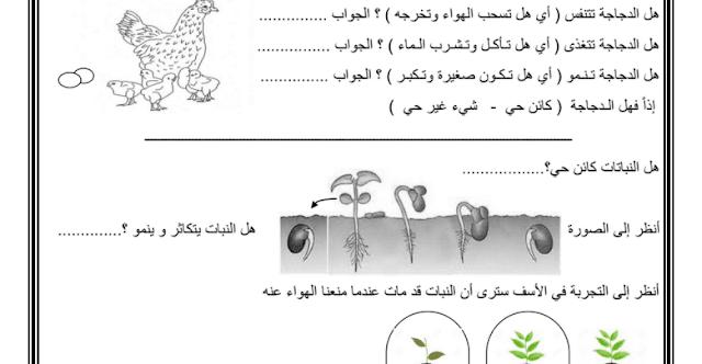 ورقة عمل درس النباتات كائنات حية علوم فصل أول صف أول