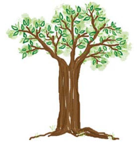Memecahkan Psikotes Menggambar Pohon Draw A Tree Pradikto S