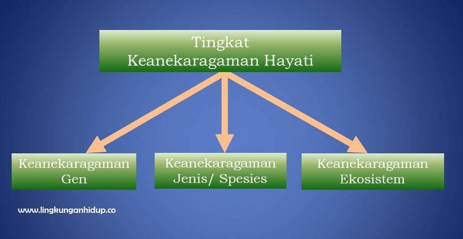 3 Tingkat Keanekaragaman Hayati Beserta Contoh dan Karakteristiknya