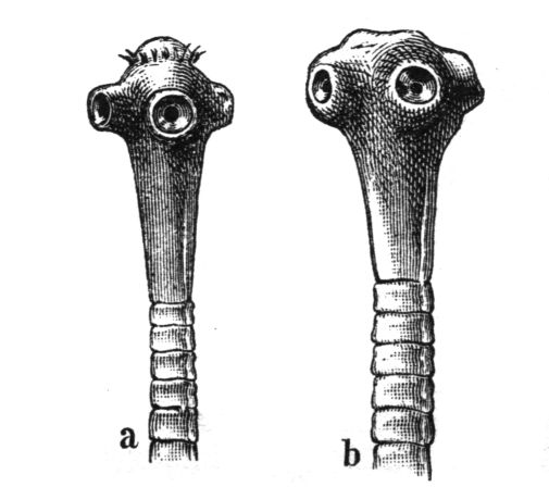 enterobius profilaxis