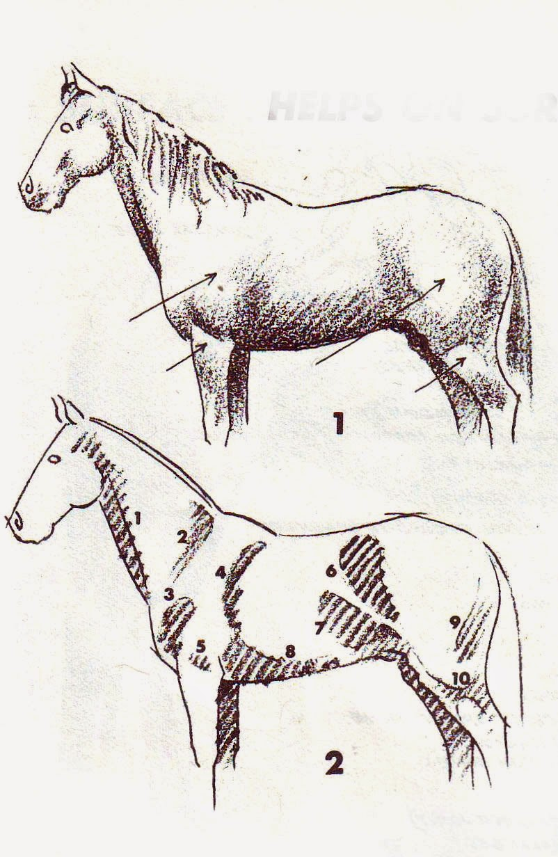 http://tips-trick-idea-forbeginnerspainters.blogspot.com/2014/10/good-horse-drawing-2-painting-tips.html
