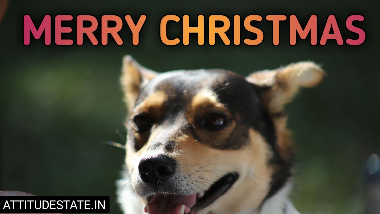 funny merry christmas gif free download