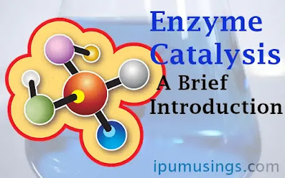 Enzyme Catalysis -A Brief Introduction (#ipumusings)(#biochemistry)(#enzymcatalysis)