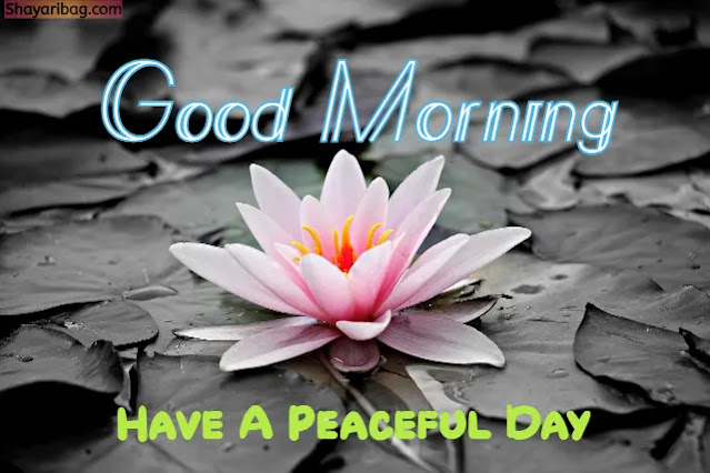 Good Morning With Flowers Images