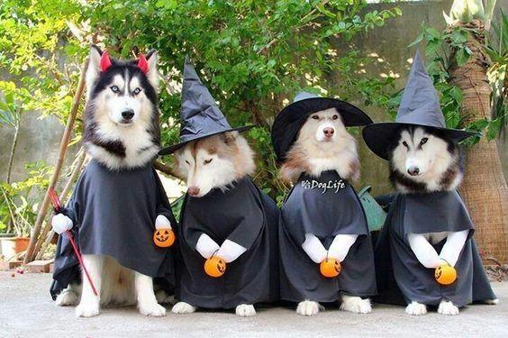 Happy Halloween Costumes for Pet DOG