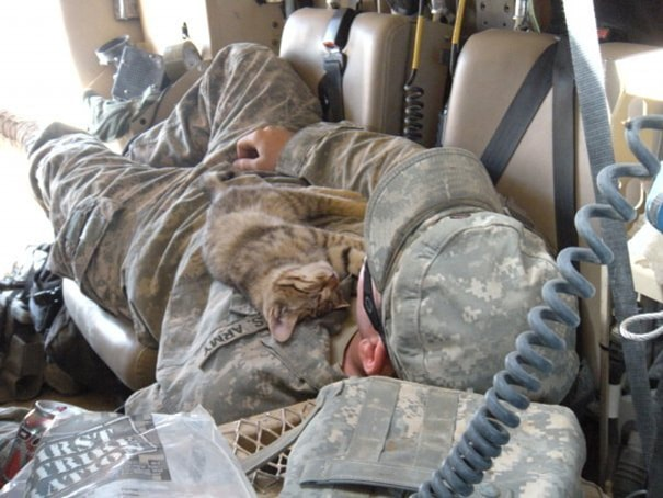 6. Stray Kitten Sleeping On My Buddy, Afghanistan 2009