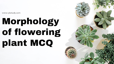 Morphology of flowering plant MCQ