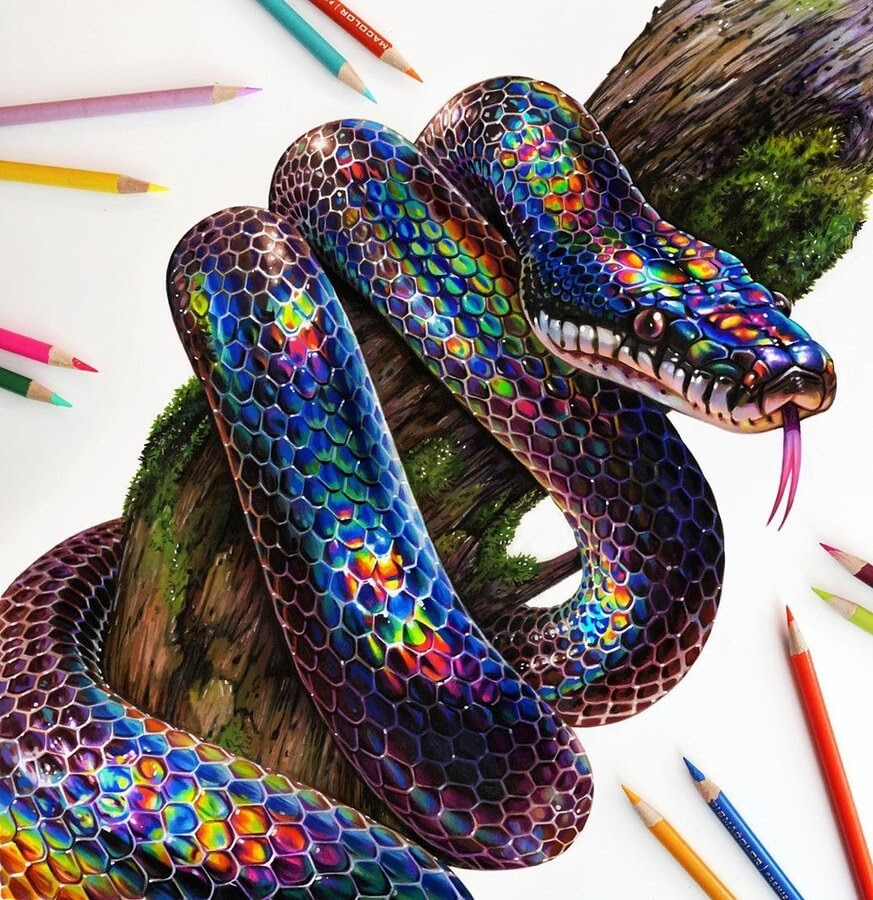 01-Snake-Animal-Drawings-www-designstack-co