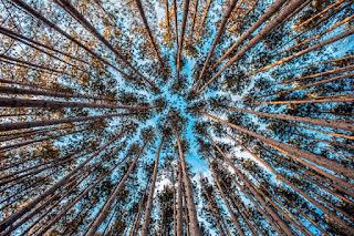Le ciel bleu vu à travers la forêt
