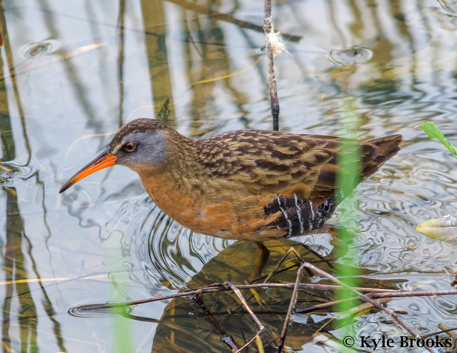 Virginia Rail Central Ohio