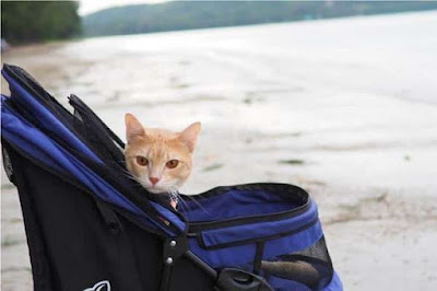 Why Do You Choose the Best Push Train For Cats Why Do You Choose the Best Push Train For Cats?
