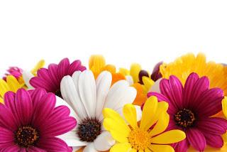 Rüyada çiçek dikmek
