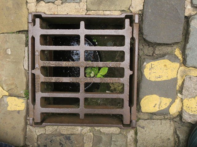 Tree growing in drain next to yellow lines.