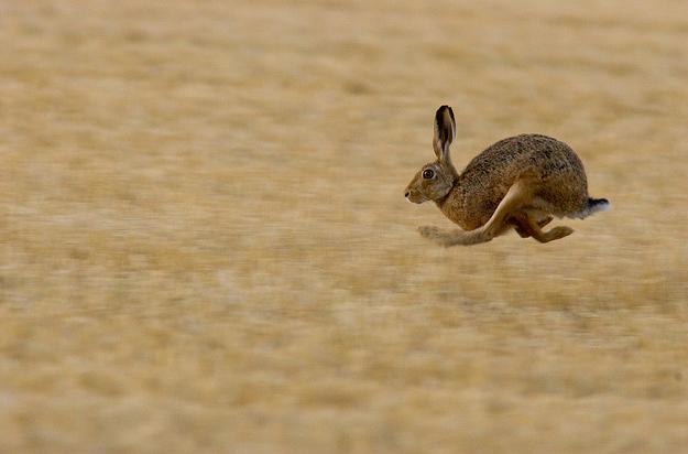 jack rabbit http://iboqq.com