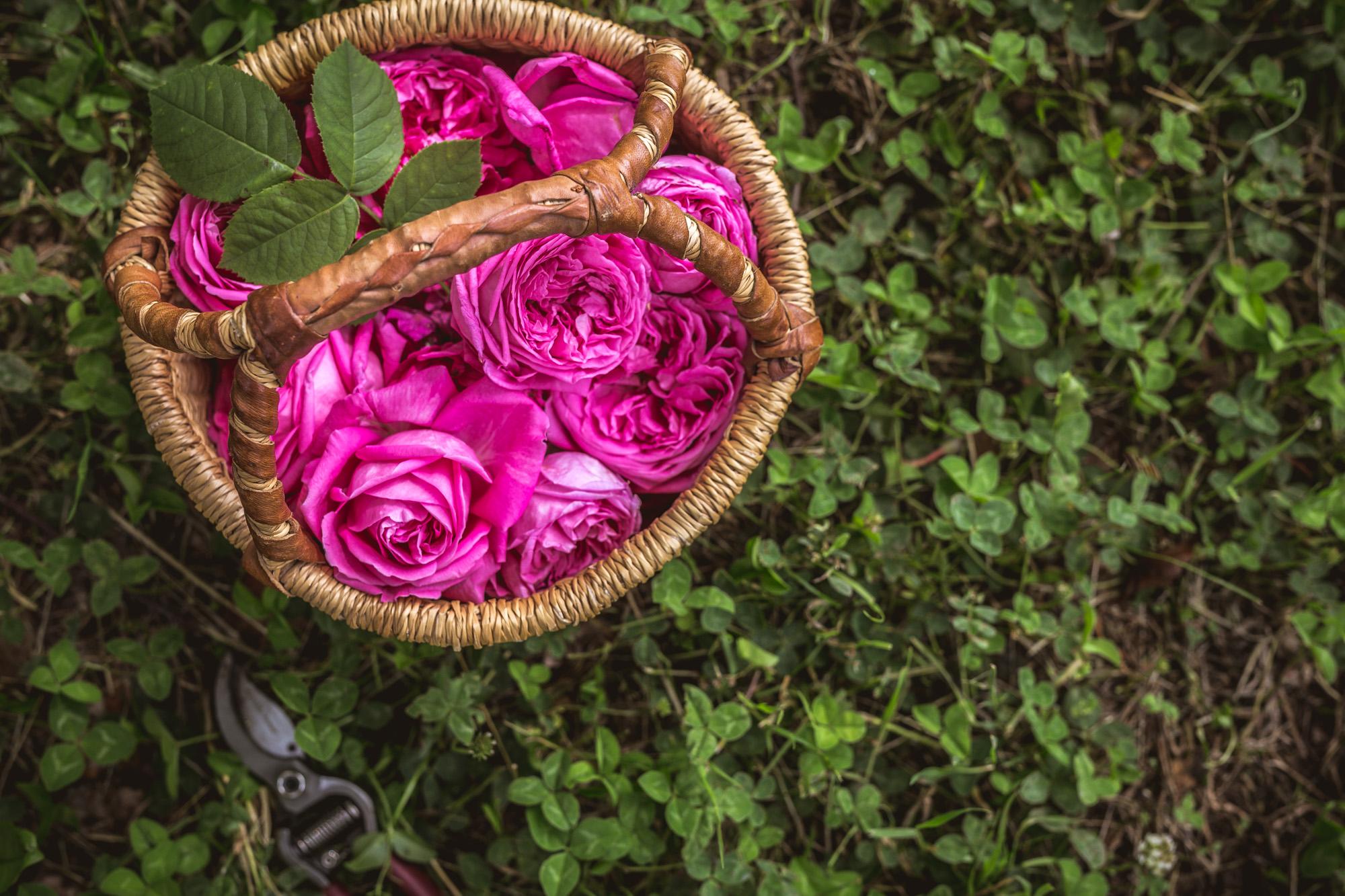 Три рецепти с Маслодайна роза