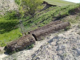 Пам'ятка природи «Дружківські скам'янілі дерева»