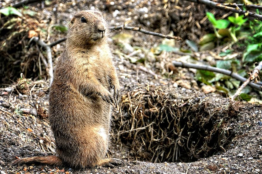 Two Infected with Plague after Eating Marmot Meat