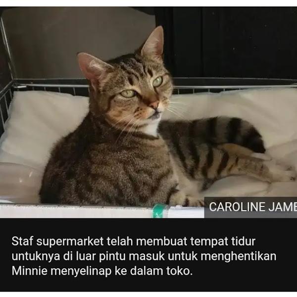 Minnie, Kucing Manipulatif dari Nottinghamshire