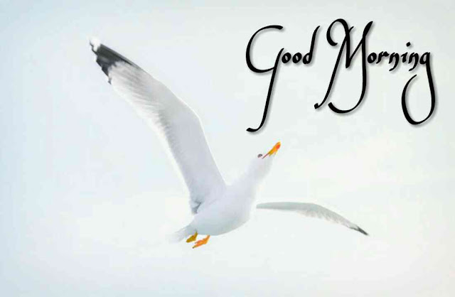 Good morning flying birds