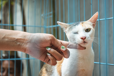 A calico cat in a blue cage is scratched by an extended hand