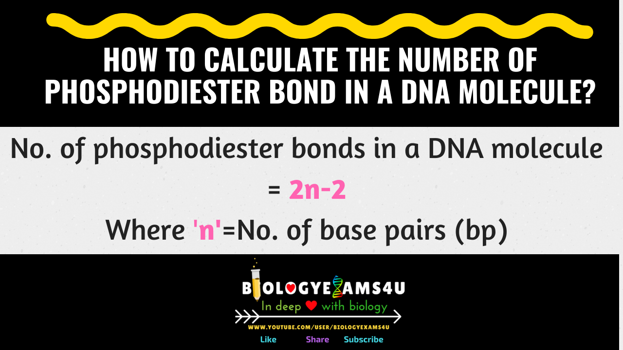 Simple Formula to Calculate the number of phosphodiester bond in a DNA molecule