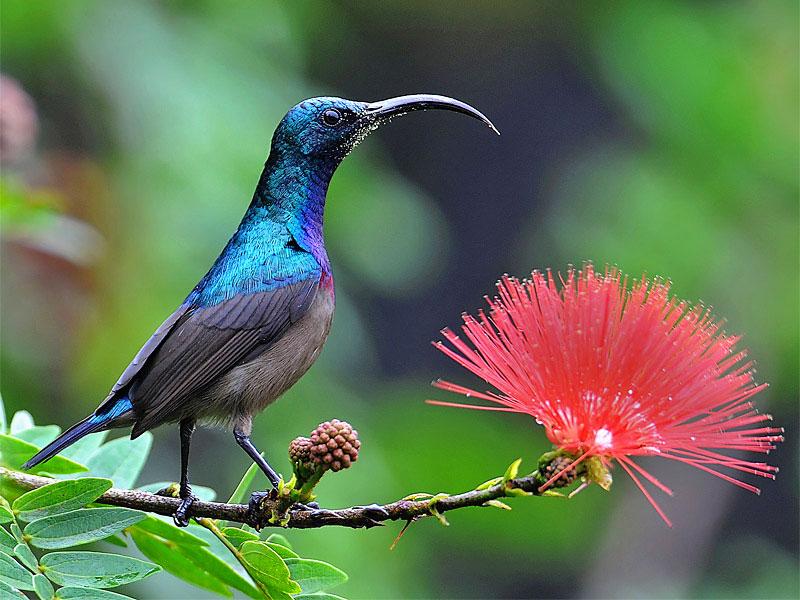 5 Jenis Bunga Yang Sangat Disukai Oleh Burung Kolibri Rumah Kolibri