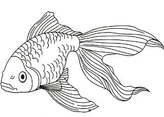 sketsa ikan