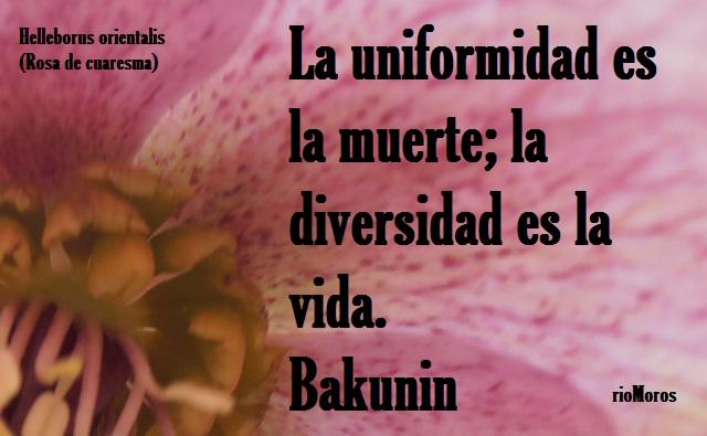 La uniformidad es la muerte, la diversidad es la vida Bakunin