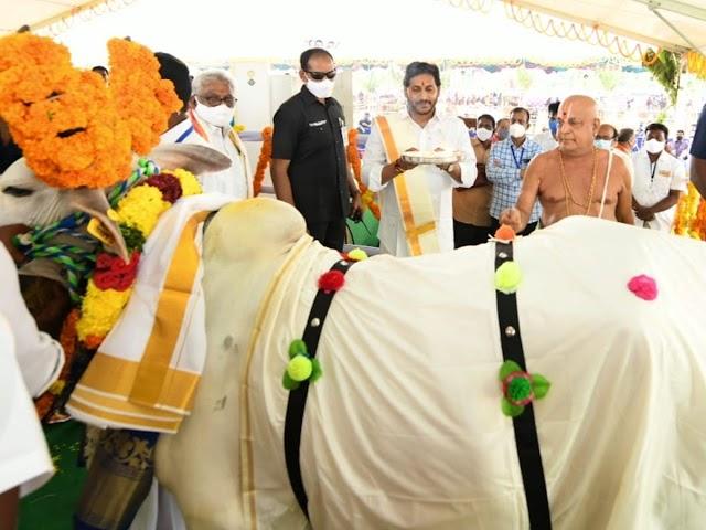 కట్టు బొట్టు మార్చి హైందవ సాంప్రదాయంలో గోమాతకు పూజలు చేసిన జగన్