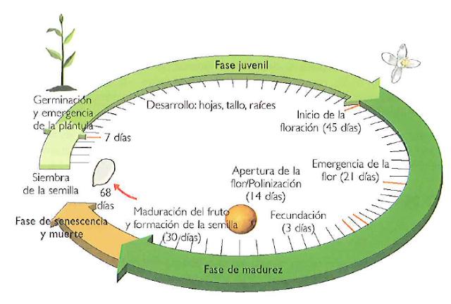 Patrones y parámetros del crecimiento vegetal