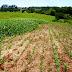 Irrigação transforma cenário e produtividade em propriedade do Noroeste gaúcho