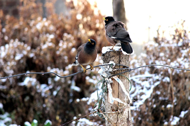 birds at dhanaulti