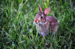Jenis Jenis Kelinci dan Prospek Usaha Ternak Kelinci