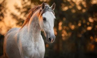 تفسير مشاهدة الحصان في حلم العزباء
