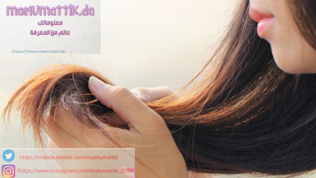 أفضل-طرق-علاج- جفاف-الشعر- وتساقطه- 2012