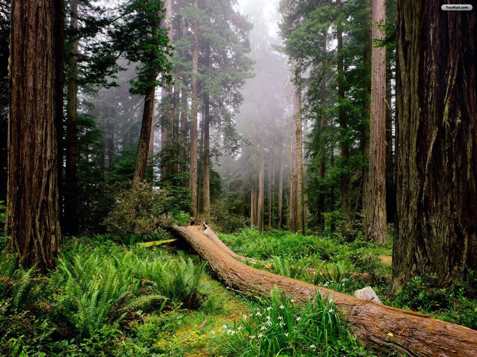 Forest Wallpapers | Desktop Wallpapers