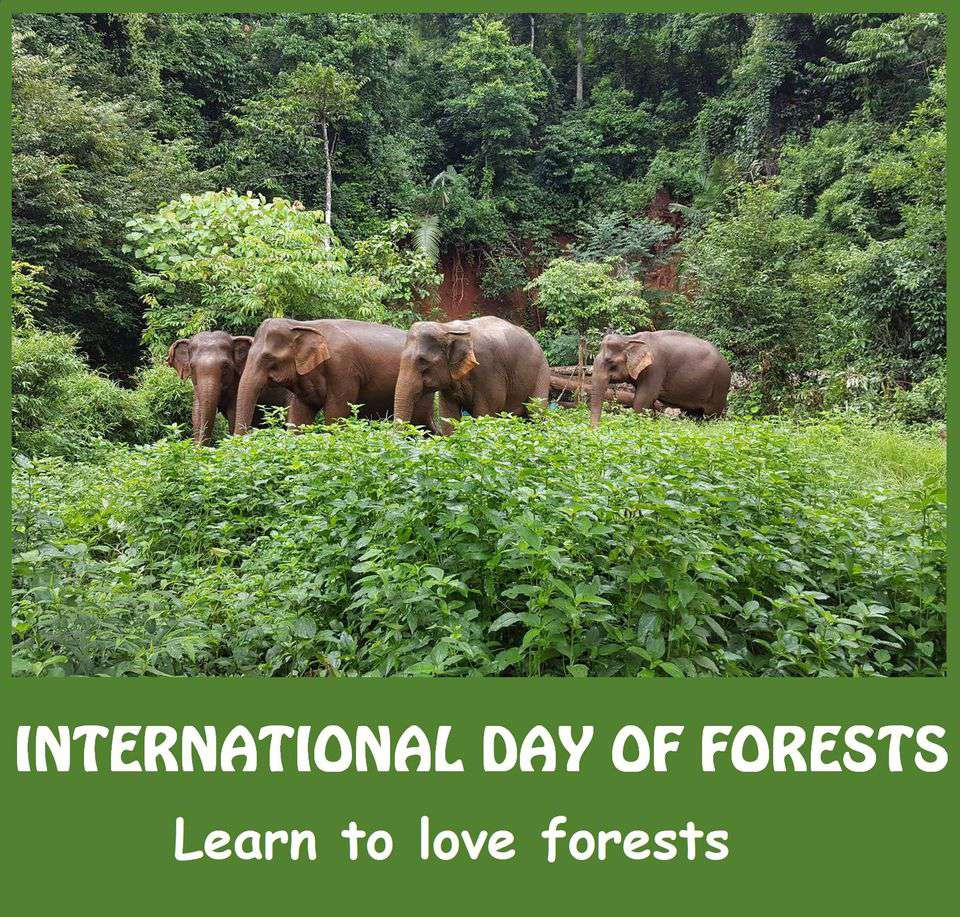 International Day of Forests Wishes Awesome Images, Pictures, Photos, Wallpapers