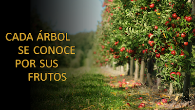 Evangelio según Lucas 6, 43-49: Cada árbol se conoce por sus frutos