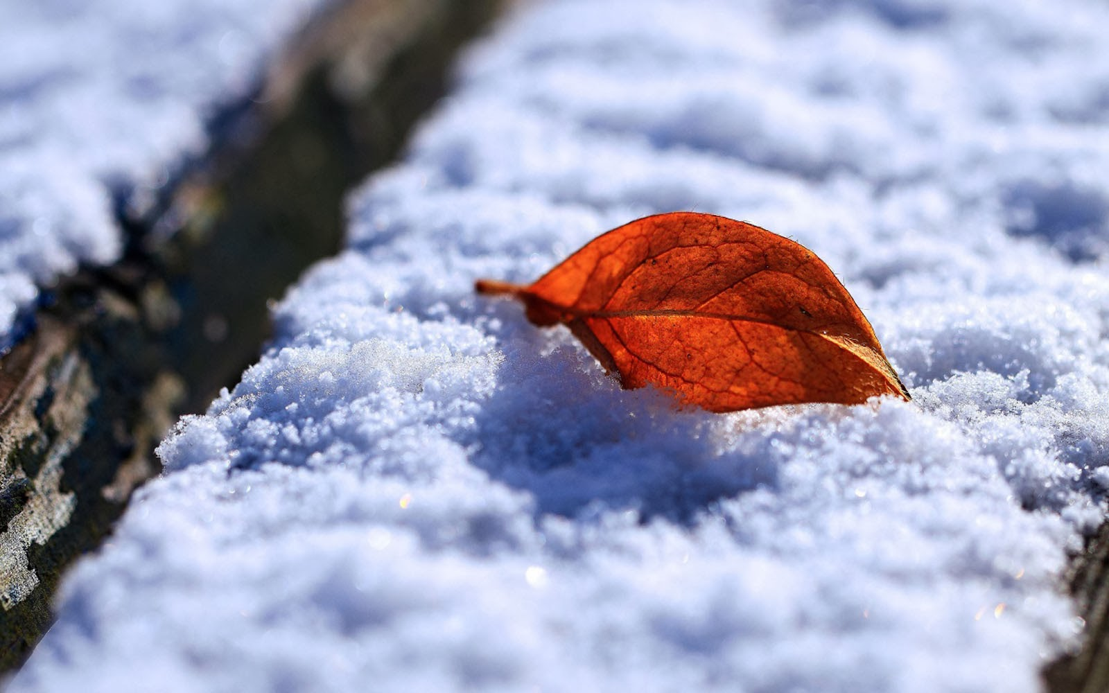 Free Download 3d Wallpapers For Windows 7 Desktop Wallpapers Leaf And Snow Wallpapers
