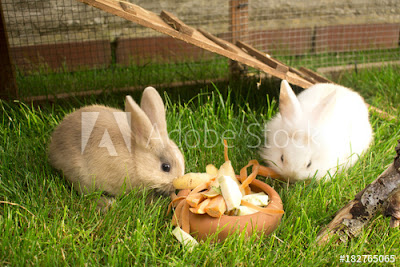 Rabbits Bremerhaven Germany.