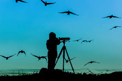 Birdwatching; A Free And Fascinating Pastime For All