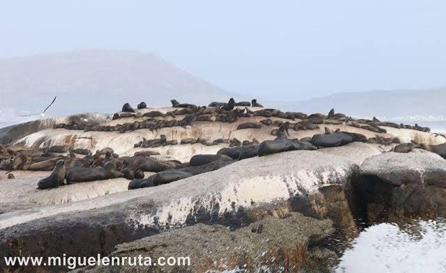 Colonia-leones-marinos-Duiker-Island