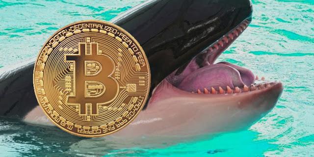 La quatrième baleine à bitcoins la plus riche a acheté $12k bitcoins à un prix moyen inférieur à 40k dollars au cours des trois dernières semaines.