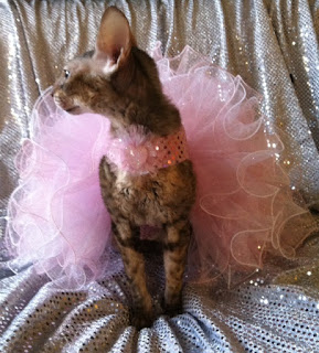 Coco the Couture Cat in Pink Pageant Gown