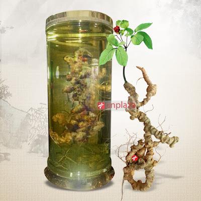 Rượu sâm Ngọc Linh có tác dụng chữa bệnh huyết áp thấp