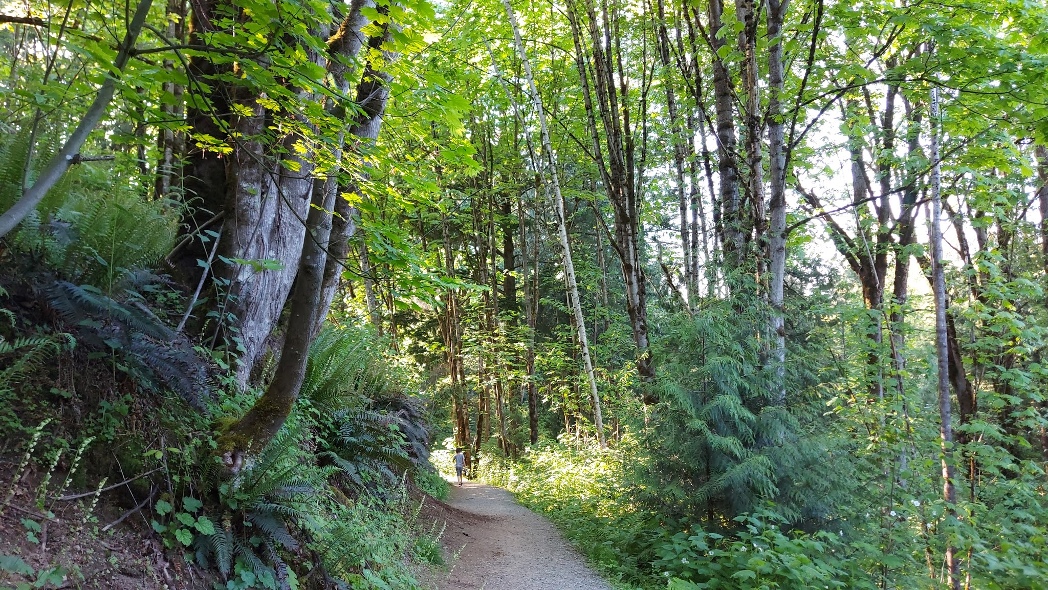 Clearbrook Trail forest